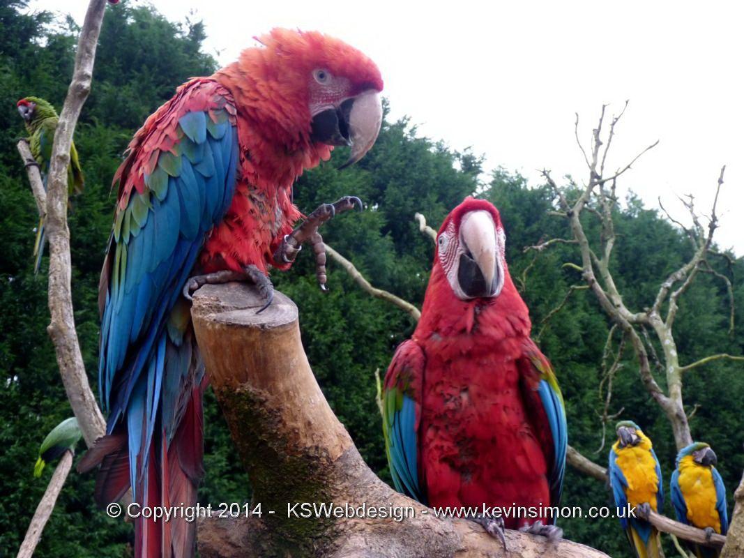 Visit To Tropical Birdland