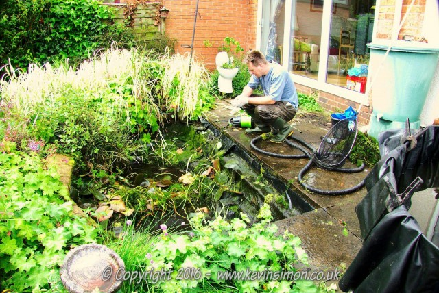 Garden Fish Pond Tips