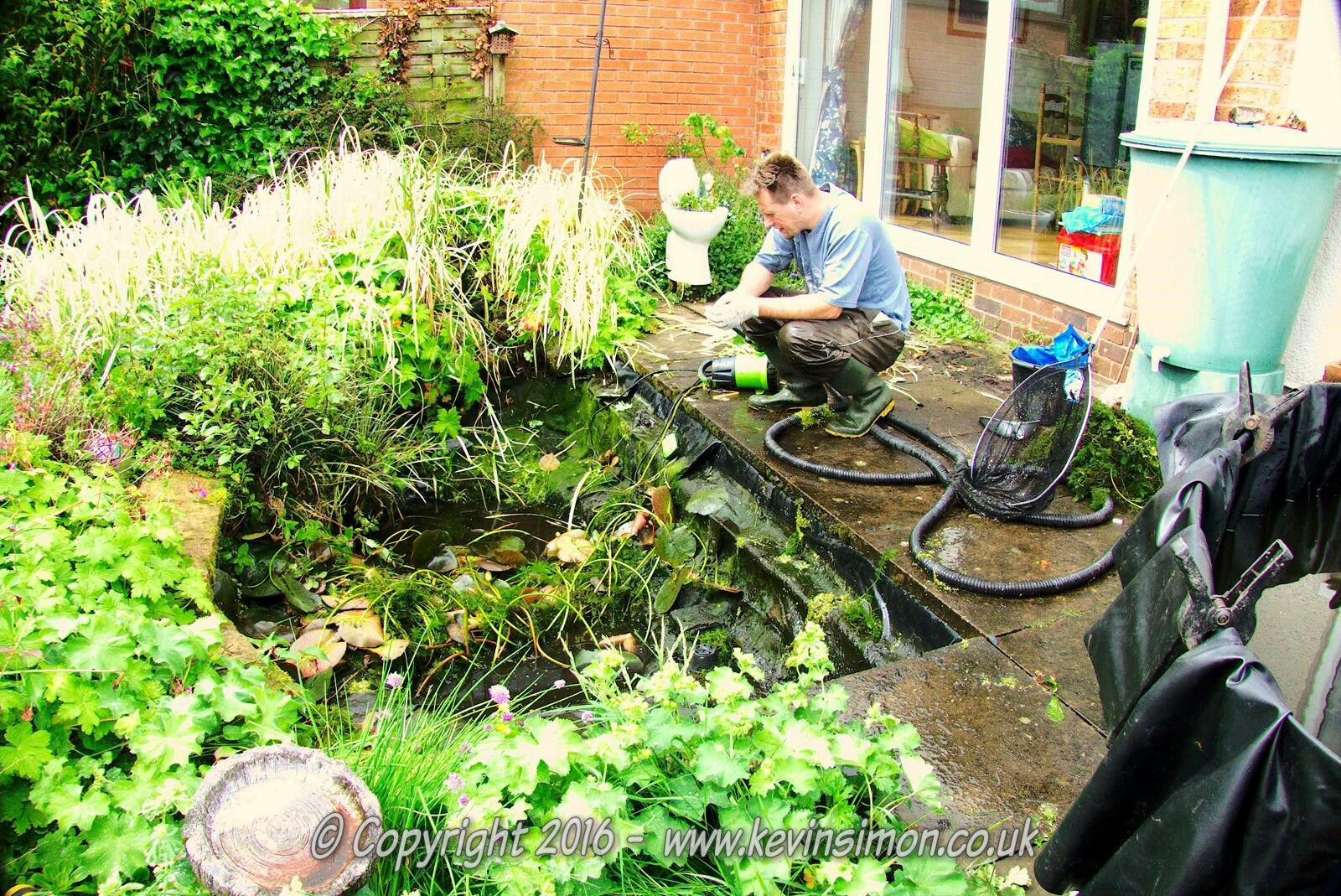 Examples of full fish pond service ks pond services for Pond service